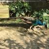 台湾29日目  壽山動物園に行ってきた