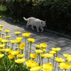 仙川公園の猫