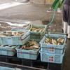 2019年11月27日 小浜漁港 お魚情報