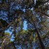 自伐型林業を見学。HIPHOPが息づく伝統の智頭林業