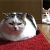 思考が行動に表れる猫