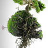 植物を使った&モチーフにした現代のアート作品6選