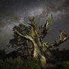 天と地の競演!美しく輝く星々と大地にそびえ立つ老木