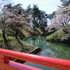 開幕!弘前桜祭り 2(足下にも花)