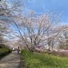 お花見日和 (3/27)~あつぎつつじの丘公園~