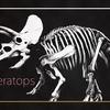 トリケラトプスのイラスト02