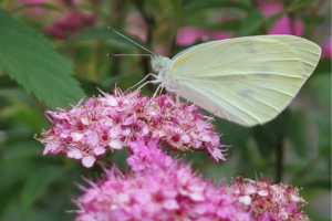 【雑学】自然観察指導員の徒然草=君たちがいて僕がいる 花と蝶の深い関係~後編