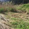 自然農の畝の立て方と里芋の植え付け方
