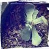 野バラの精のちいさな芽