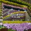 世界らん展2020(1) ~オーキッド・ゲート、日本大賞、優秀賞、優良賞、奨励賞