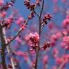 いなべ梅林散策(1分咲き)前半
