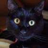 今日の黒猫モモ&白黒猫ナナの動画ー593