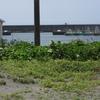 砂原の植物観察ー茅ヶ崎海岸