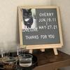飼い猫の死について調べてみた
