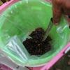 ミツバチの奥深さ-養蜂技術研修のまとめその2