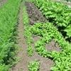 農園日誌ーPARTⅦ-先人達の叡智を学ぶ