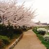 """「お花見」は奈良時代から1000年以上続く""""超ロングランイベント""""だった。日本人は何で桜が好きなの?"""