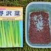 野沢菜の種まき!