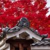 京都・西陣 - 妙覚寺の紅葉