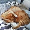 猫の癒やし効果は絶大です