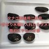 タナゴ繁殖用二枚貝上手な飼育方法・貝を水槽に入れる前の手順とは?