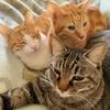 猫と暮らすには覚悟が必要【体験談】飼う前に知っておきたいこと