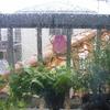 8月最後の日は雨