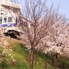 満開の桜と南海電車