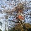 ときわ公園の桜&石炭記念館
