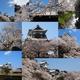 Instagramベスト9ふう、金澤桜百景2020年(その1)