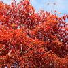 「京都へ納骨に行ったついでに、近江八幡に立ち寄りました その1」 - 教林坊