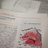 研修参加報告 (埼玉動物医療センター) 鼻咽頭ポリープ