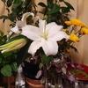 植物を飾りたいヒト。 ~好きなお花屋さん紹介~