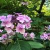 カナダひとり旅⑥【ビクトリア】季節度外視!たくさんのお花を同時に見て癒される名所へ行こう