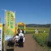 風力発電と菜の花の横浜町