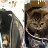 【じゃないほうのKARA】短期在留者ペット遺棄防止キャンペーン