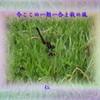 『 今ここの一期一会よ秋の風 』物真似575秋zrr2603