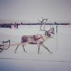 スウェーデンの冬のお祭り ヨックモックウィンターマーケットへ再び