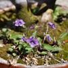 春の彼岸頃の花
