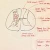 【Courseraで神経科学を学ぶ(6)】脊髄の中身、断面を見ていこう。レッツ脊髄スラッシュ