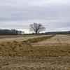 パナソニックLX100の風景写真はどうか。SIGMA DP2 Merrillとの比較