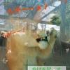 熊本へ日帰り旅。まずは熊本市動植物園へ。