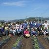 丸三のさつま芋畑2013(定植)