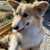 世界の名犬牧場|冬でも犬との触れ合いが楽しいスポット:群馬県前橋市