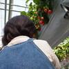 苺と散髪と桜