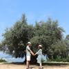 【小豆島旅行】『オリーブの島のシンボルツリー』樹齢千年のオリーヴ大樹