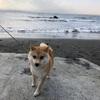 江ノ島に行ってきました