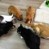 癒しを求めて〜保護猫カフェへ