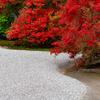 京都・洛北 - 曼殊院の霧島躑躅