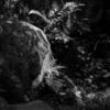 フジフィルム X-E2  京都 下鴨神社・糺の森